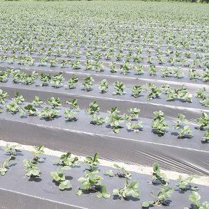 Для сельского хозяйства